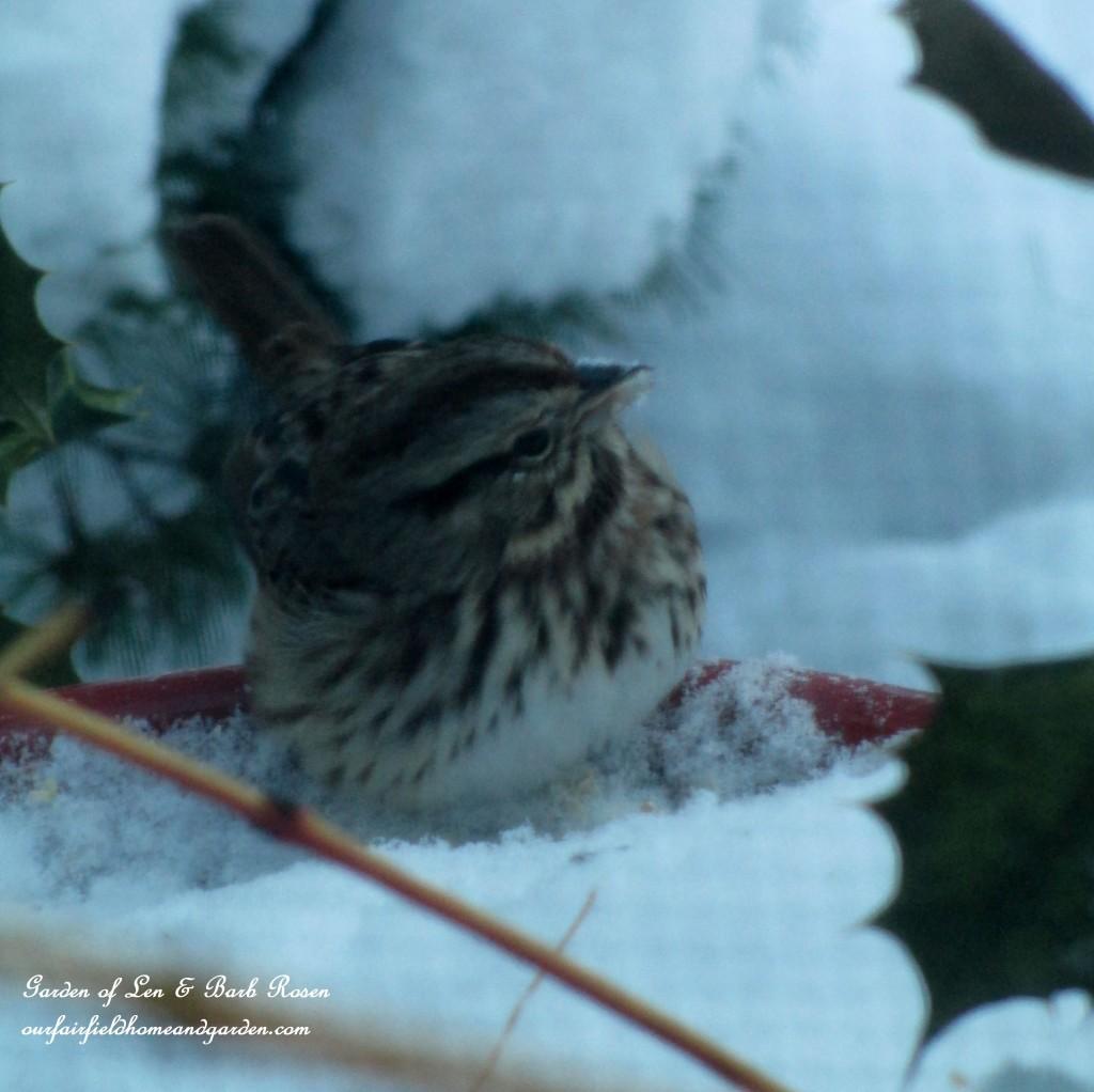 snowy dinner http://ourfairfieldhomeandgarden.com/winter-birds-our-fairfield-home-garden/