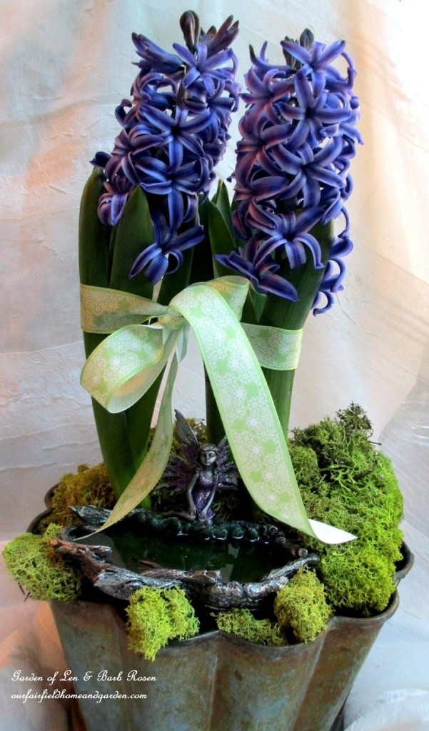 hyacinths http://ourfairfieldhomeandgarden.com/indoor-gardening-winter-beauty/