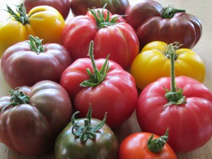 tomato varieties http://www.hometalk.com/o0ocpyc5gb