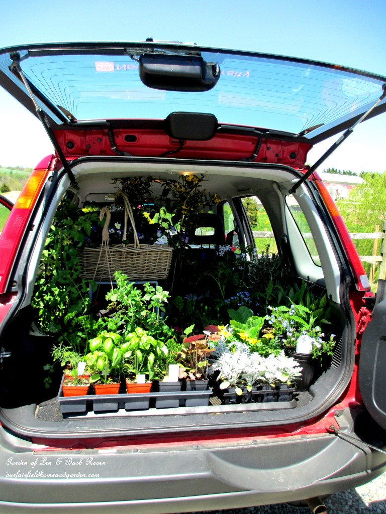 carload of nursery plants http://ourfairfieldhomeandgarden.com/spring-fever/