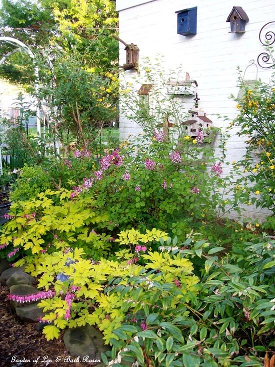 Spring Blooms http://ourfairfieldhomeandgarden.com/spring-fever/