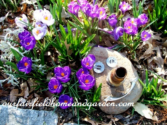 crocus & garden art http://ourfairfieldhomeandgarden.com/spring-fever/