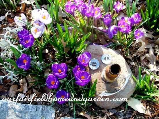 crocus & garden art http://ourfairfieldhomeandgarden.com/spring-fever/