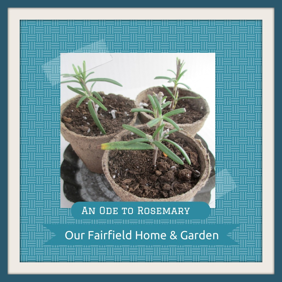Rosemary http://ourfairfieldhomeandgarden.com/an-ode-to-rosemary-my-favorite-herb/