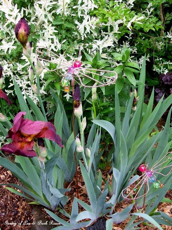 Burgundy Iris http://ourfairfieldhomeandgarden.com/spring-fever/