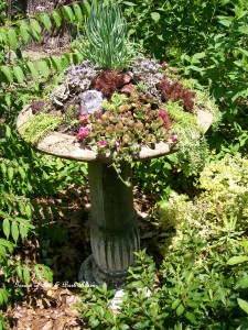 Succulent Birdbath https://ourfairfieldhomeandgarden.com/upcyclerecycle-project-creating-a-succulent-garden-birdbath/