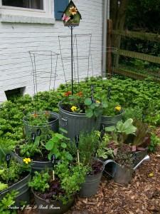 galvanized garden http://ourfairfieldhomeandgarden.com/galvanized-garden-repurposed-container-planting/