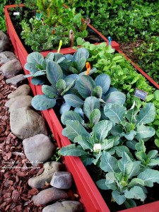 raised planting beds https://ourfairfieldhomeandgarden.com/diy-project-raised-beds-for-free/