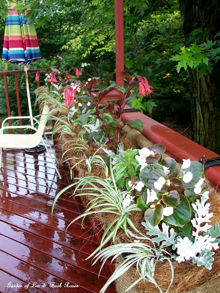 Burlap lined hayrack planter http://ourfairfieldhomeandgarden.com/burlap-a-thrifty-container-liner/