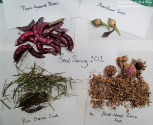 save seeds http://ourfairfieldhomeandgarden.com/diy-seed-saving-101/