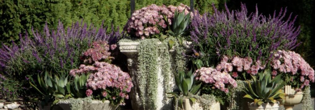 Longwood Gardens http://magictouchandhergardens.wordpress.com/2013/10/07/longwood-gardens-in-the-rain/
