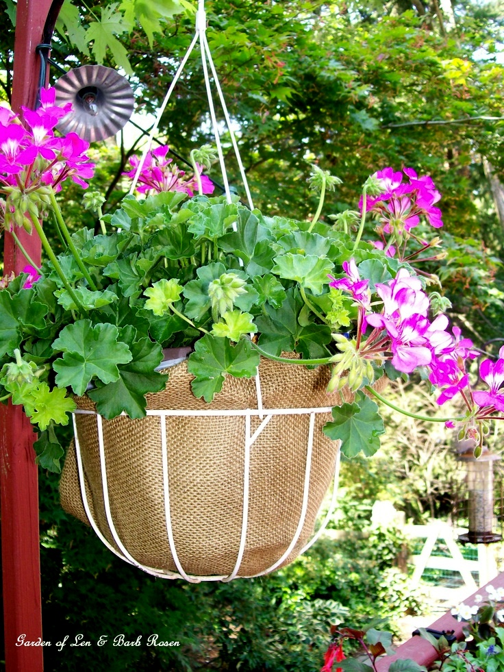 burlap lined hanging basket http://ourfairfieldhomeandgarden.com/burlap-a-thrifty-container-liner/