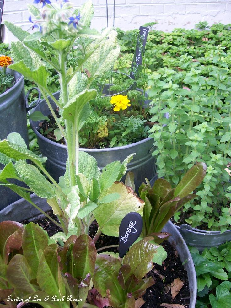 Galvanized Garden Http://ourfairfieldhomeandgarden.com/galvanized Garden  Repurposed