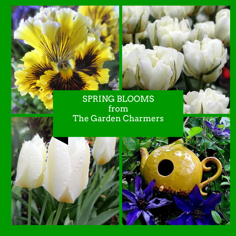 spring blooms http://ourfairfieldhomeandgarden.com/spring-blooms-a-bouquet-for-you-from-the-garden-charmers/