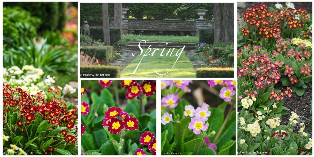spring garden http://ahealthylifeforme.com/2013/05/16/spring-garden/