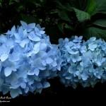 Garden Divas http://ourfairfieldhomeandgarden.com/two-new-garden-divas/