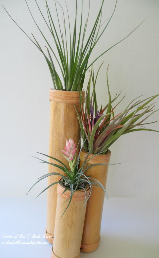 Air Plants http://ourfairfieldhomeandgarden.com/air-plant-palette/