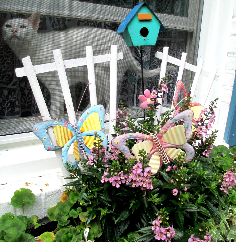 cat in the window http://ourfairfieldhomeandgarden.com/june-garden-our-fairfield-home-garden/