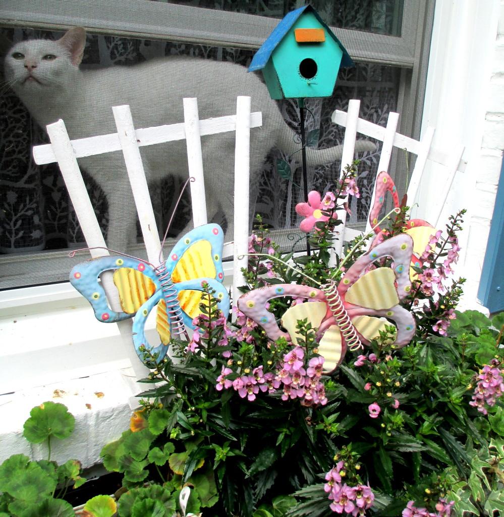 cat in the window https://ourfairfieldhomeandgarden.com/june-garden-our-fairfield-home-garden/