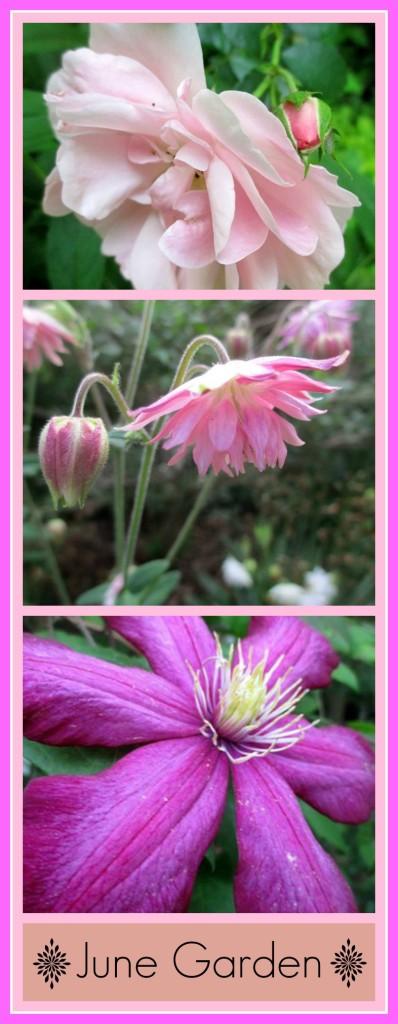 June garden https://ourfairfieldhomeandgarden.com/june-garden-our-fairfield-home-garden/
