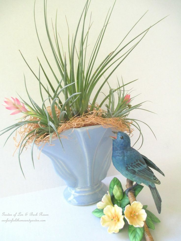 Air Plants in Containers http://ourfairfieldhomeandgarden.com/air-plant-palette/