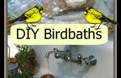 DIY Birdbaths