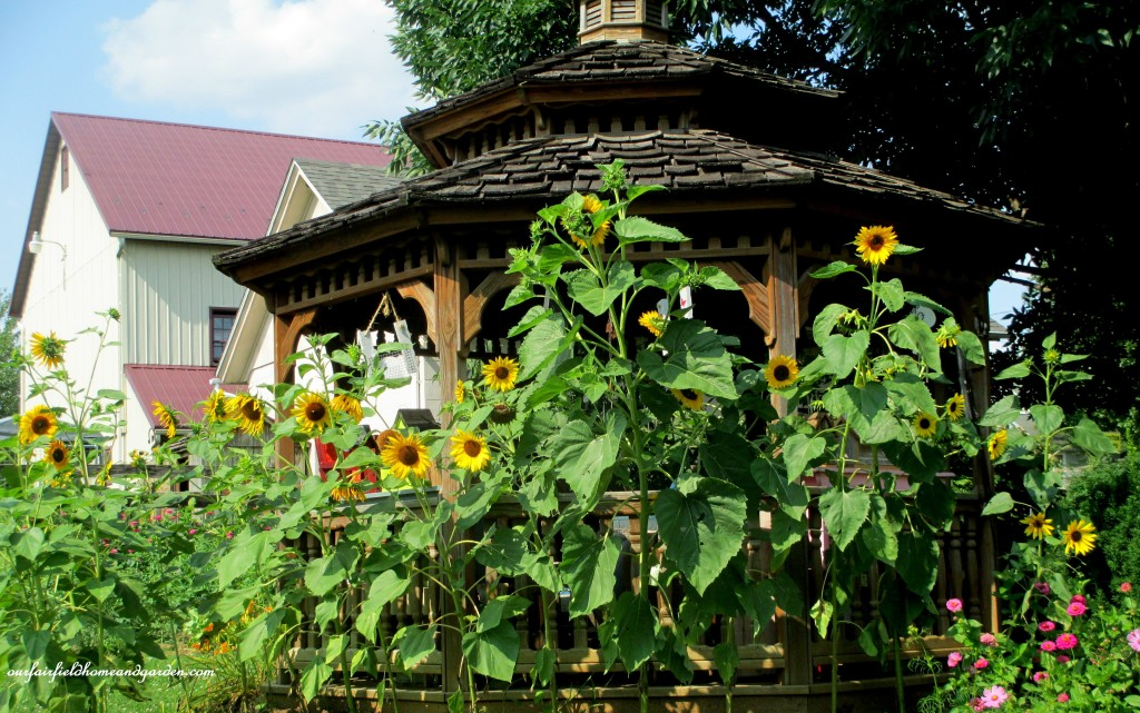 Sunflowers & Gazebo https://ourfairfieldhomeandgarden.com/field-trip-potting-bench-from-a-dresser-and-other-ideas-gathered-in-lancaster-county-pa/