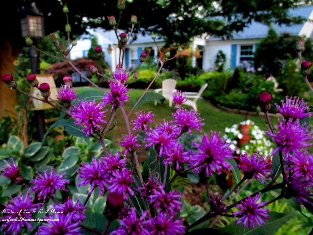 Summer Garden http://ourfairfieldhomeandgarden.com/in-a-summer-garden-our-fairfield-home-garden/