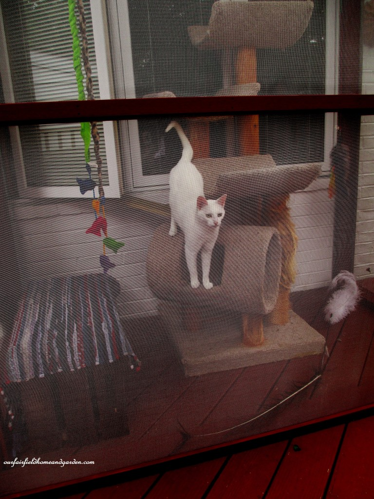Catio https://ourfairfieldhomeandgarden.com/build-a-catio-a-tiny-screen-house-for-kitty-cats/