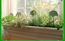 Windowsill Windowbox