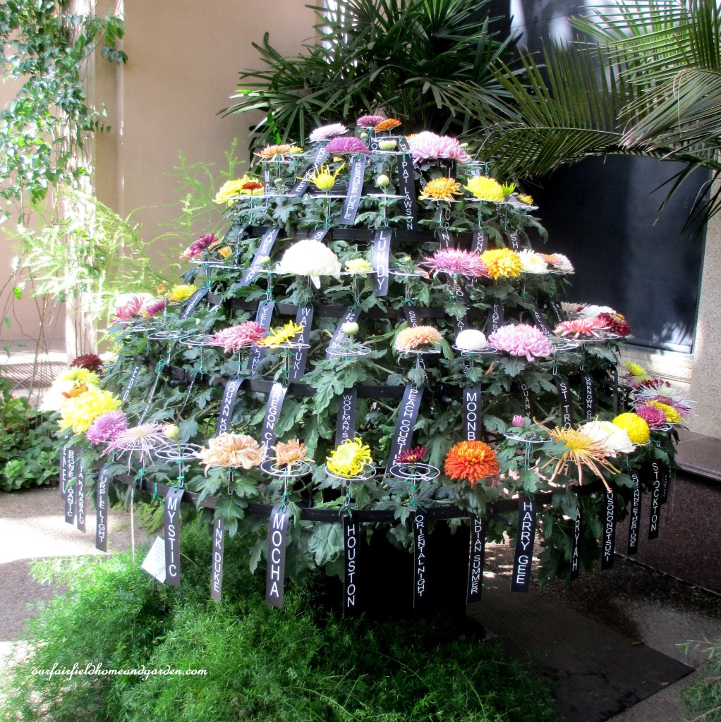 100 Chrysanthemum Blooms http://ourfairfieldhomeandgarden.com/field-trip-chrysanthemum-festival-at-longwood-gardens/