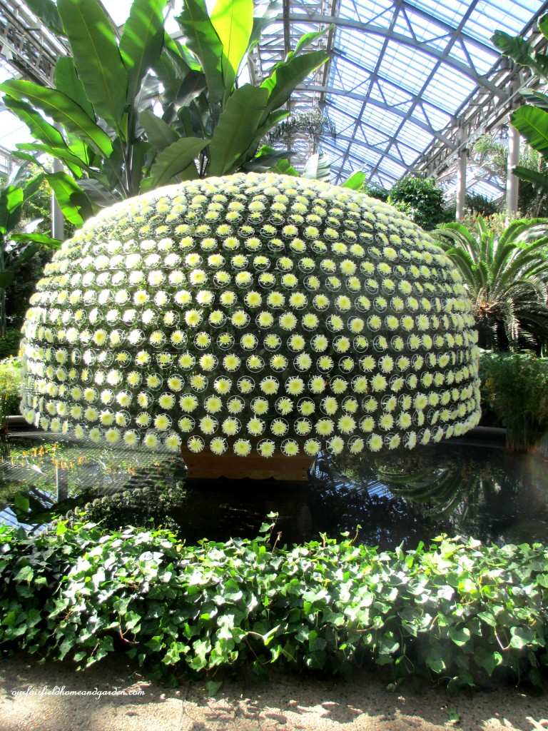 1000 Bloom Chrysanthemum https://ourfairfieldhomeandgarden.com/field-trip-chrysanthemum-festival-at-longwood-gardens/
