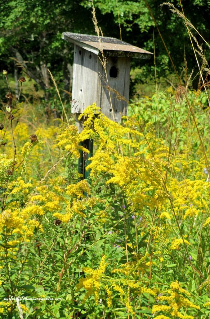 Bluebird House https://ourfairfieldhomeandgarden.com/longwood-gardens-a-walk-in-the-meadow/