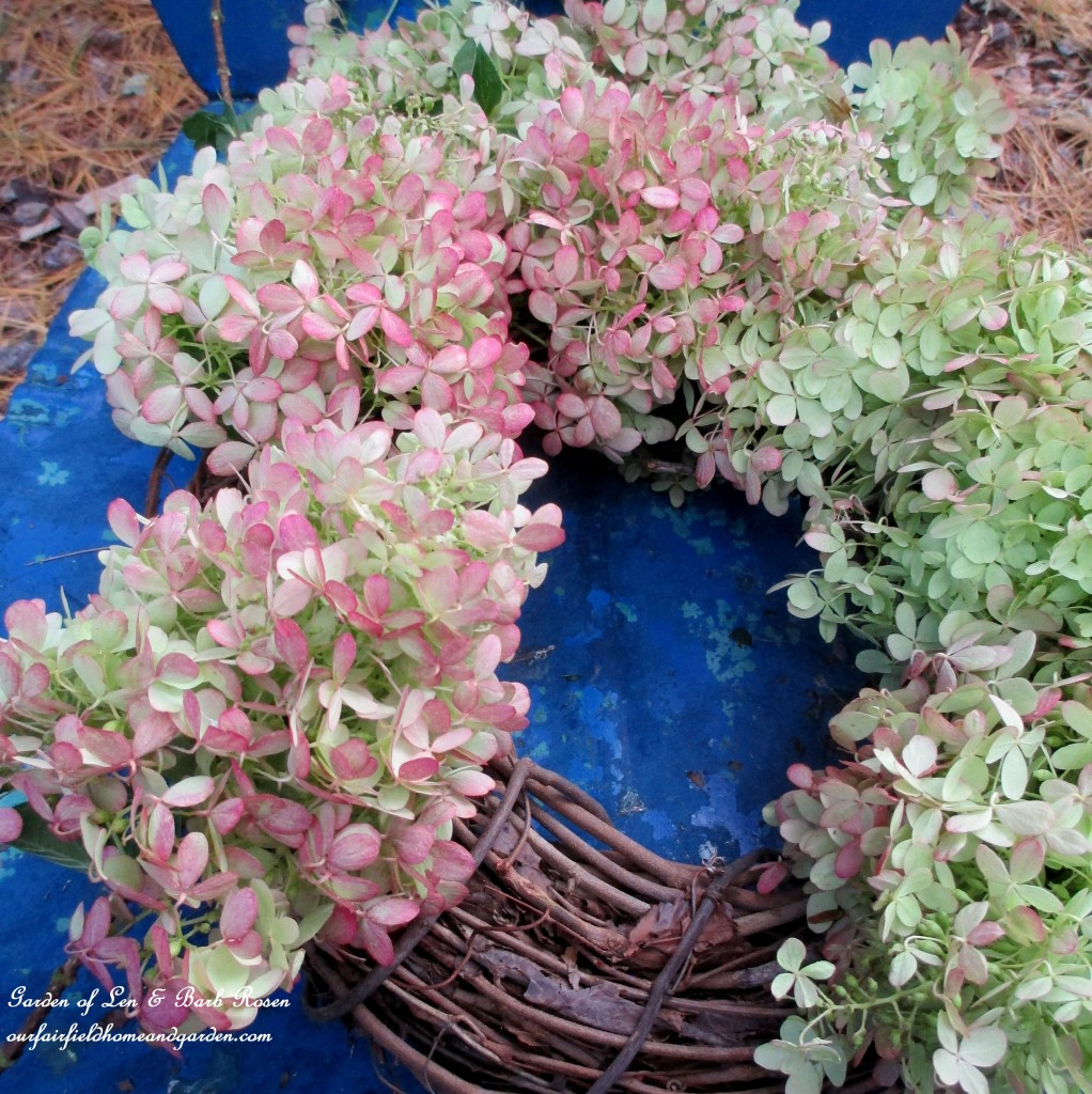 Making a Hydrangea wreath https://ourfairfieldhomeandgarden.com/diy-free-fall-wreath-using-hydrangeas/