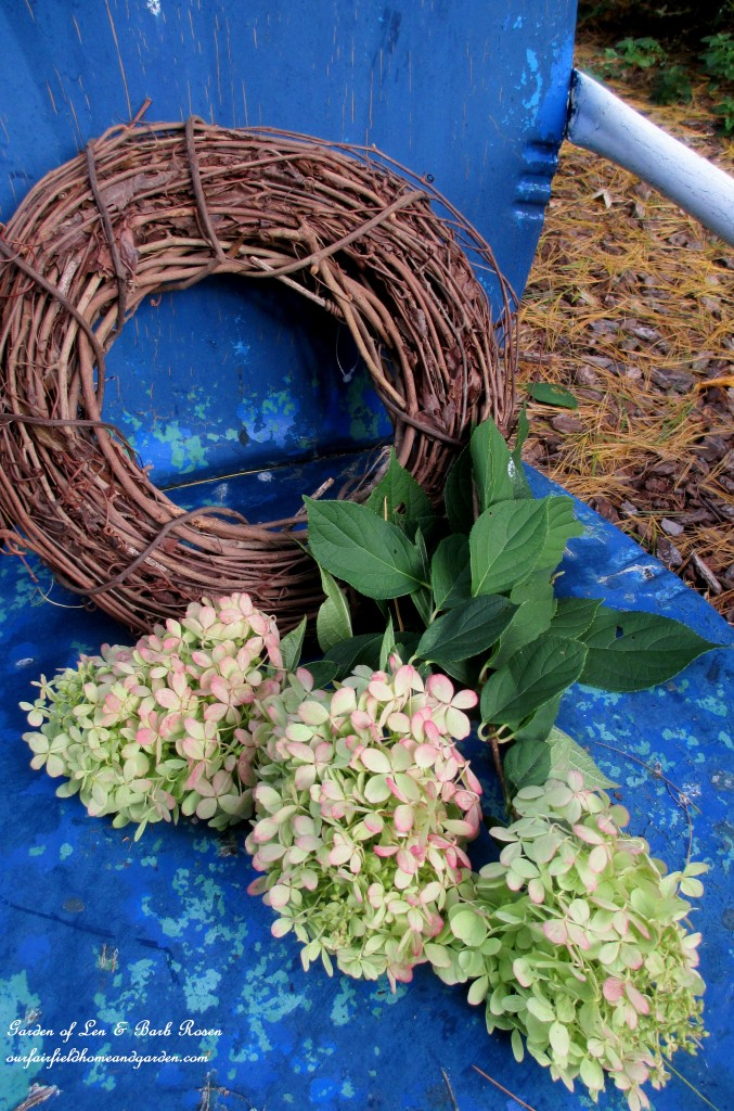 Materials to make a Hydrangea wreath https://ourfairfieldhomeandgarden.com/diy-free-fall-wreath-using-hydrangeas/