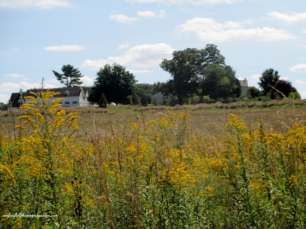 Solidago http://ourfairfieldhomeandgarden.com/longwood-gardens-a-walk-in-the-meadow/