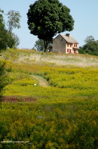 Webb Farmhouse http://ourfairfieldhomeandgarden.com/longwood-gardens-a-walk-in-the-meadow/