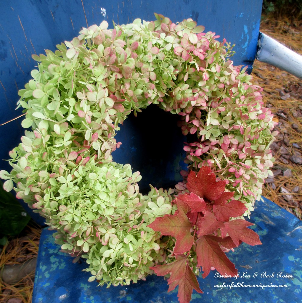 Hydrangea Wreath https://ourfairfieldhomeandgarden.com/diy-free-fall-wreath-using-hydrangeas/