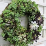 Make a Succulent Wreath http://ourfairfieldhomeandgarden.com/diy-project-make-a-succulent-wreath/