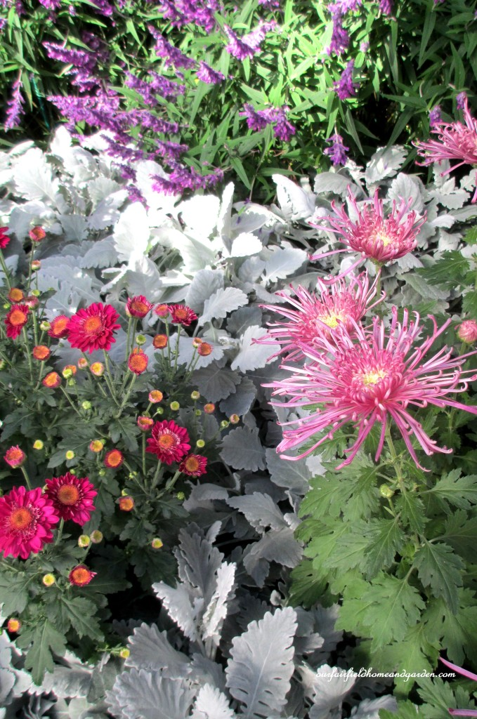 Longwood Gardens Conservatory flower bed https://ourfairfieldhomeandgarden.com/field-trip-chrysanthemum-festival-at-longwood-gardens/