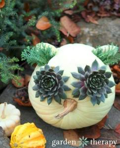 Most Natural Pumpkin Winner http://gardentherapy.ca/owl-pumpkin-planter/