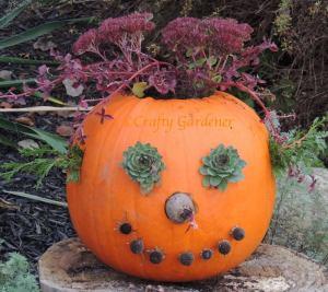 Prettiest Pumpkin http://www.craftygardener.ca/meet-jack-ogarden/