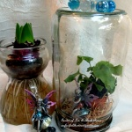 Indoor Gardening http://ourfairfieldhomeandgarden.com/indoor-gardening-winter-beauty/