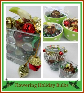 Flowering Holiday Bulbs http://ourfairfieldhomeandgarden.com/flowering-holiday-bulbs/