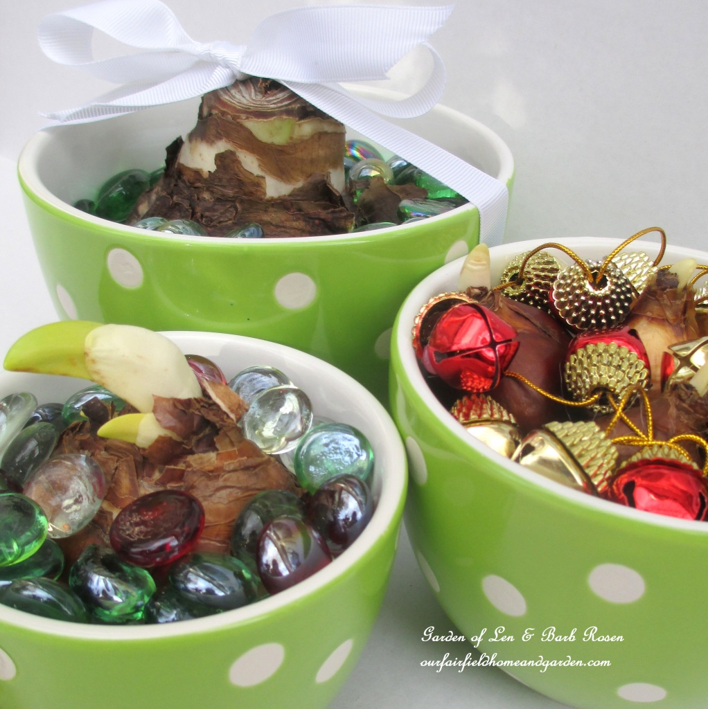 Corlorful bowls make great bulb containers! http://ourfairfieldhomeandgarden.com/flowering-holiday-bulbs/