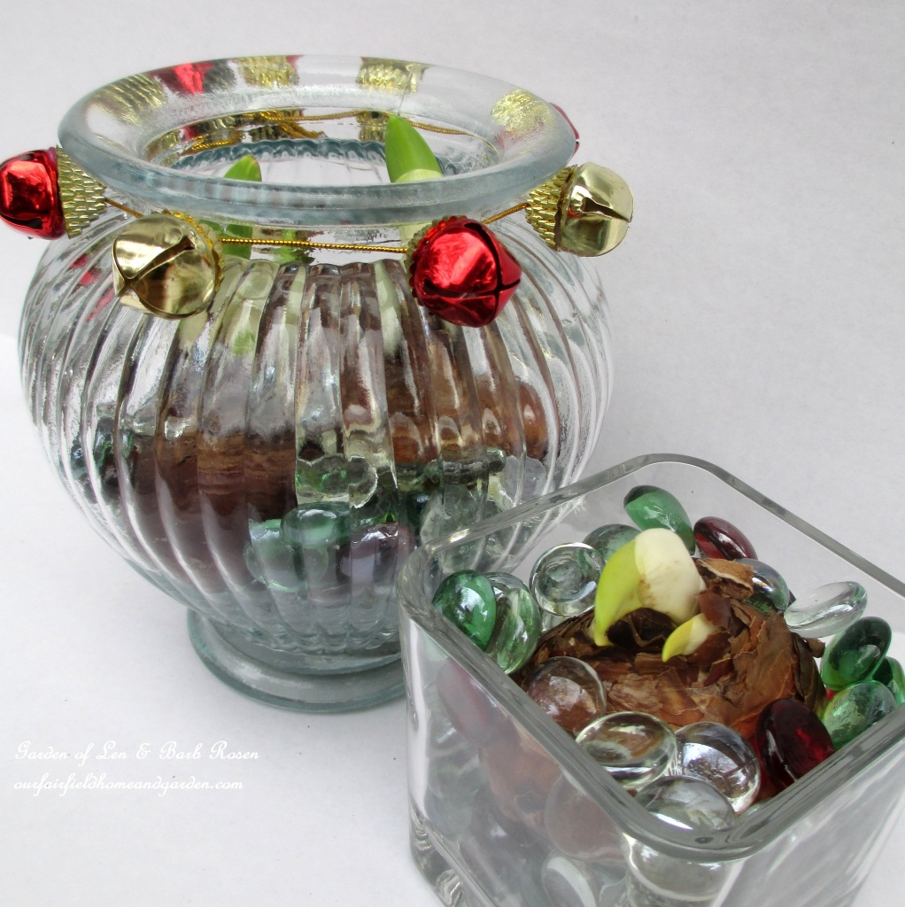 http://ourfairfieldhomeandgarden.com/flowering-holiday-bulbs/ Dollar Store and recycled glassware are inexpensive yet beautiful bulb planters.