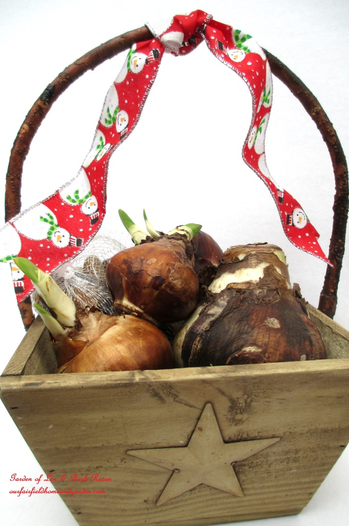 Give a basket of bulbs! http://ourfairfieldhomeandgarden.com/flowering-holiday-bulbs/