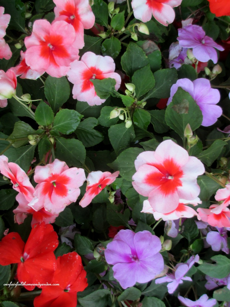 Impatiens https://ourfairfieldhomeandgarden.com/an-oregon-trip-proposal-rock-at-neskowin/