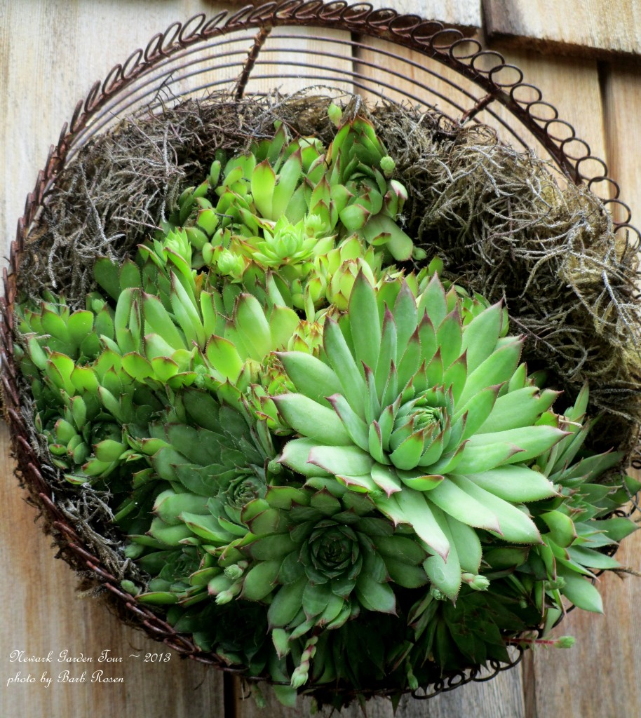 Succulents in a basket https://ourfairfieldhomeandgarden.com/unexpected-garden-accents/