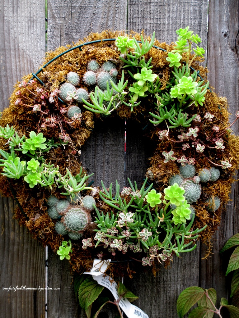 Succulent Wreath http://ourfairfieldhomeandgarden.com/unexpected-garden-accents/